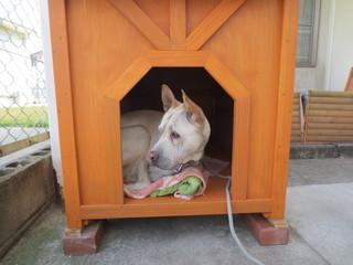 わんこin犬小屋